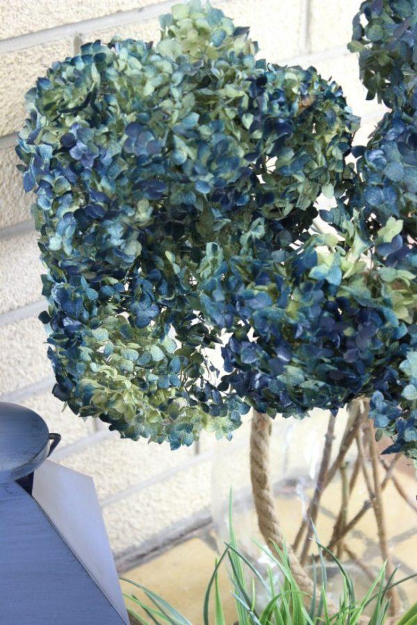 a closeup of my blue Annabelle hydrangeas.