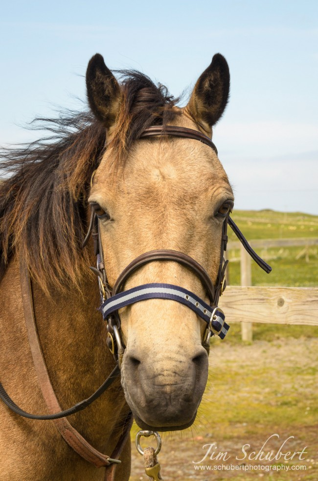 brown horse photographed by zoom lens