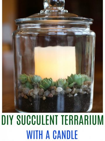 Glass storage container with a candle in the center, surrounded by hens and chick succulents.
