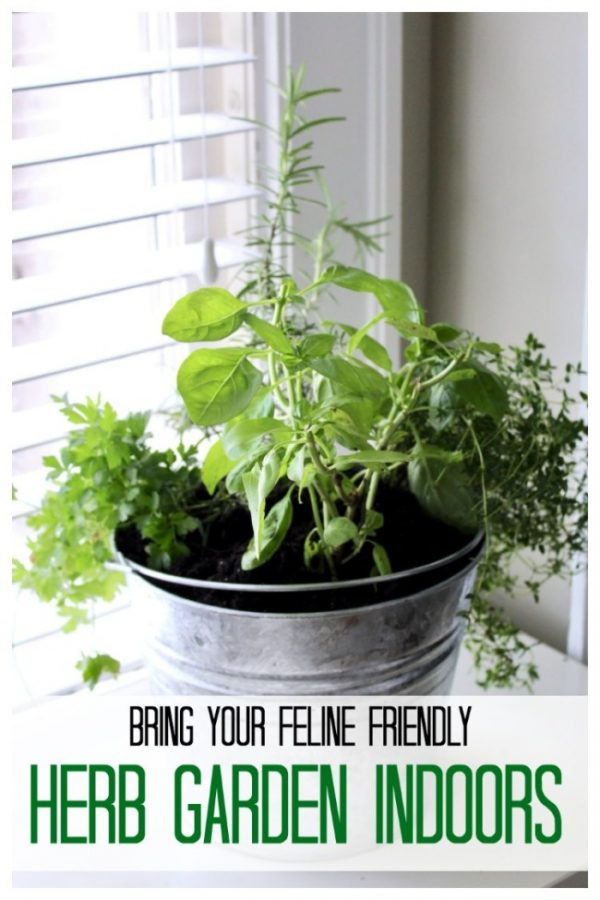 Bringing a cat friendly herb garden indoors.