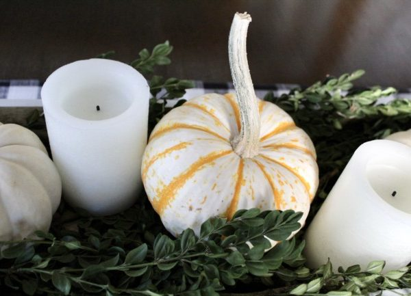 orange and white small pumpkins sitting on green boxwood branches.