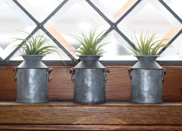 small air plants in little containers