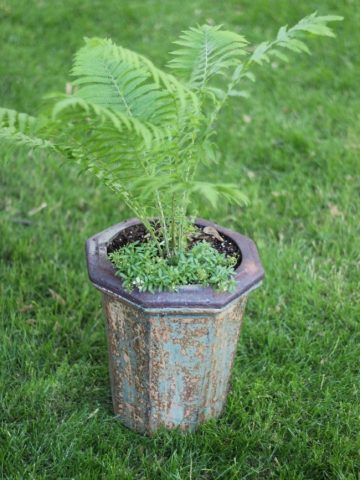 tall fern in a tall planter with patina