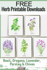 five framed herbs - parsley, lavender, oregano, chives, basil