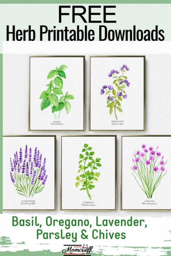 five framed herbs - parsley, lavender, oregano, chives, basil