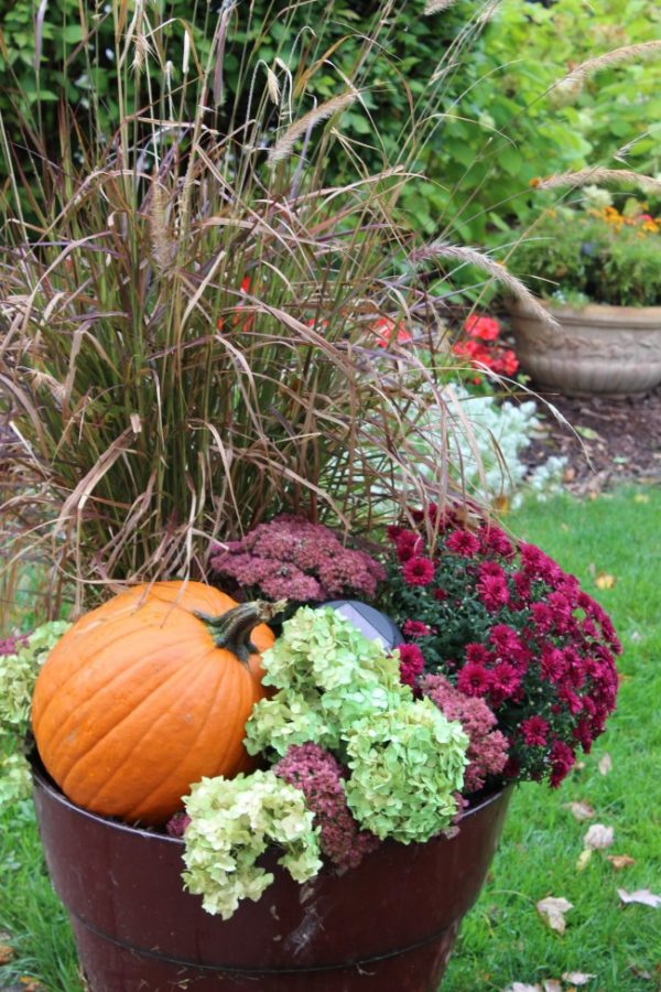 fall planter with tall purple fountain grass, a pumpkin and then hydrangea and autumn sedum flowers filling in the gaps.