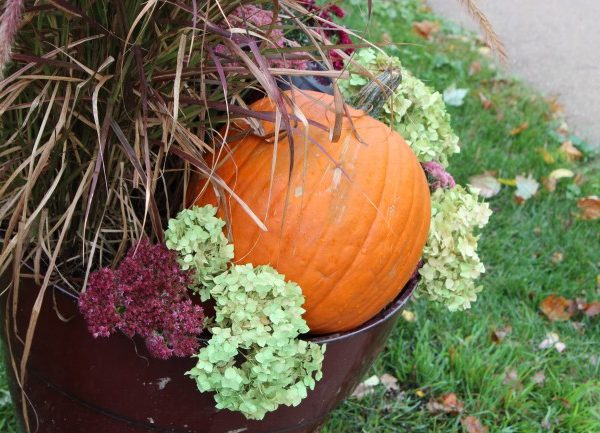 fall planter with a pumpkin, and dried light green hydrangeas