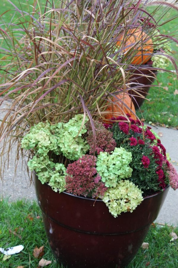 fall planter with hydrangea, autumn sedum, mums and purple fountain grass.