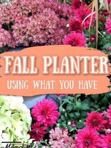 fall planter with a hydrangea, autum sedum and mums