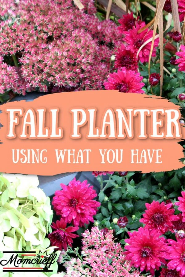 fall planter with a hydrangea, autum sedum and mums
